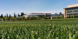Grasveld en gebouwen