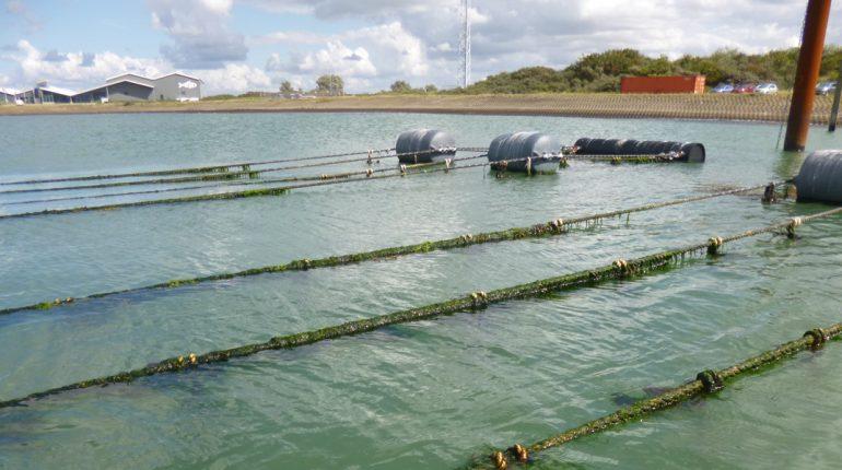 teelt van zeewier