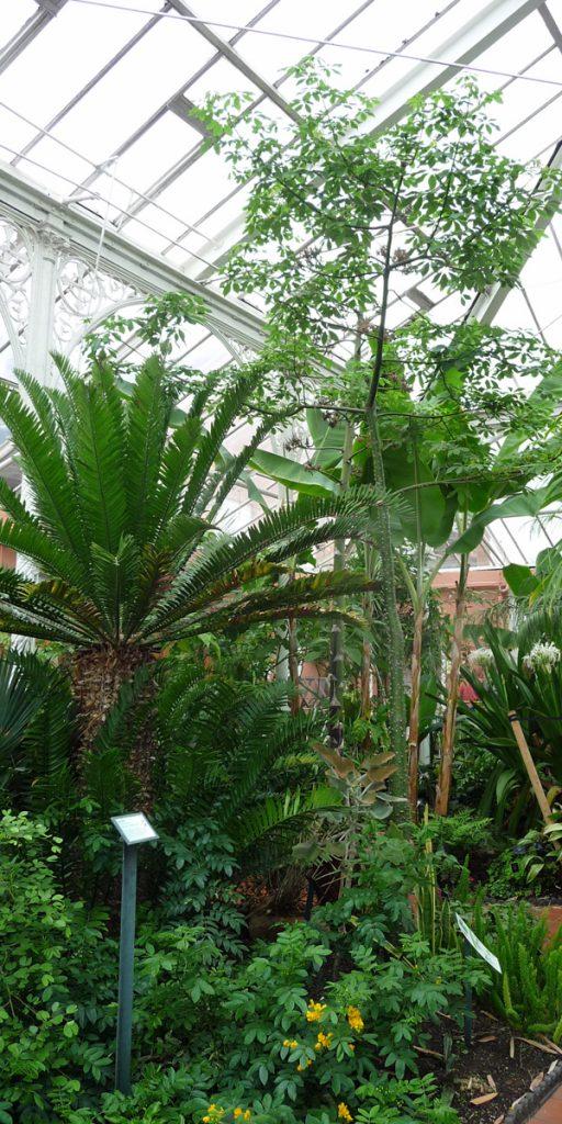 180617 Birmingham Botanical Gardens (01) tropische kas
