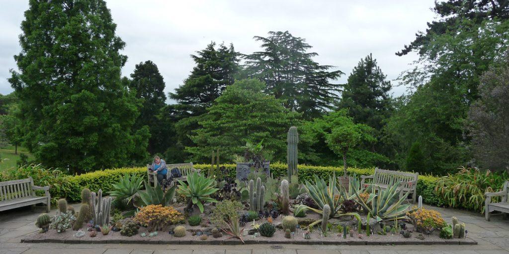 180617 Birmingham Botanical Gardens Cactussen enz