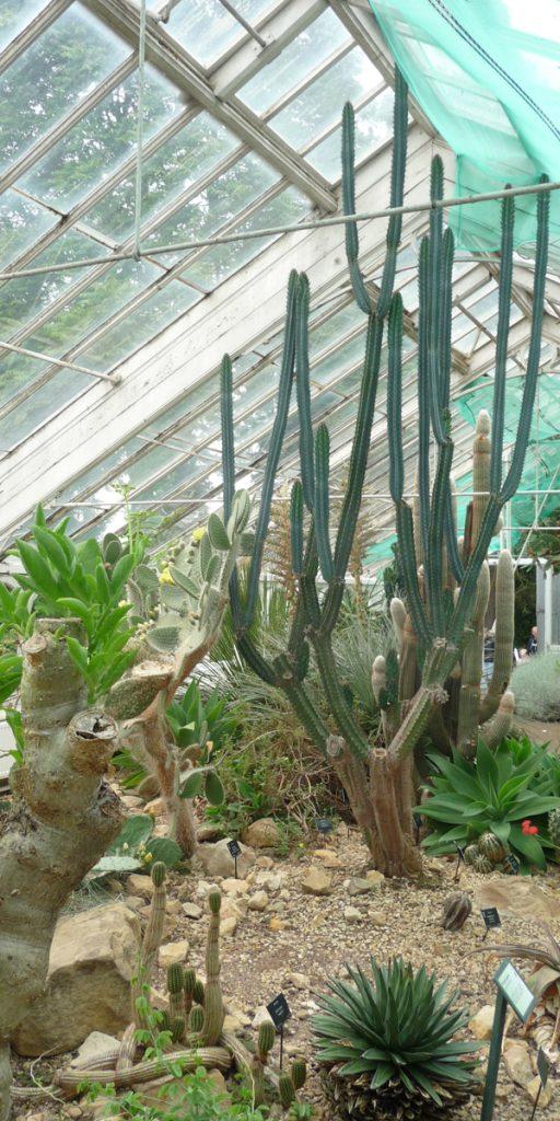 180617 Birmingham Botanical Gardens (06) Droge kas 600x1200