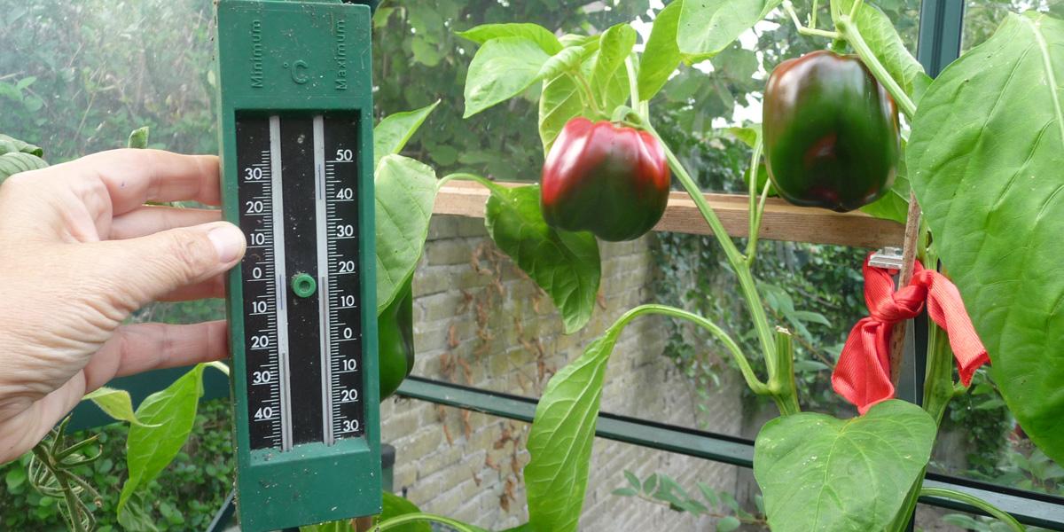 180910 Thermometer in de kas met paprika's