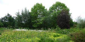 180616 Ryton Organic Gardens (06) Natuurlijke beplanting