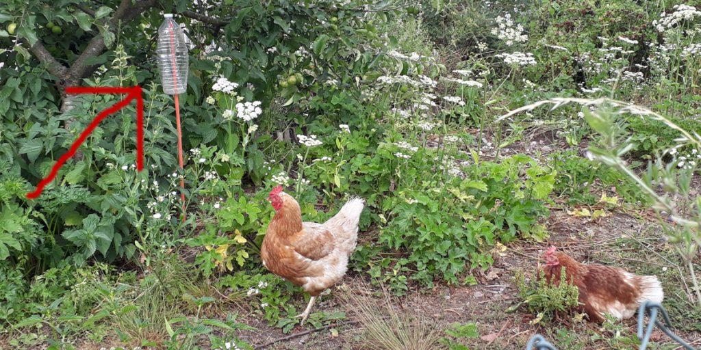 petfles in kippenren