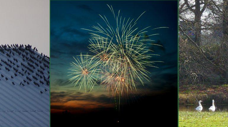Collage Nieuwjaar spreeuwen vuurwerk bomen