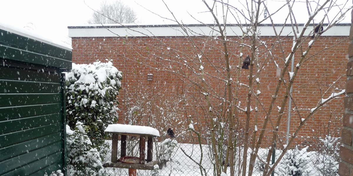 Attracting garden birds Bird feeding table in winter and blackbirds