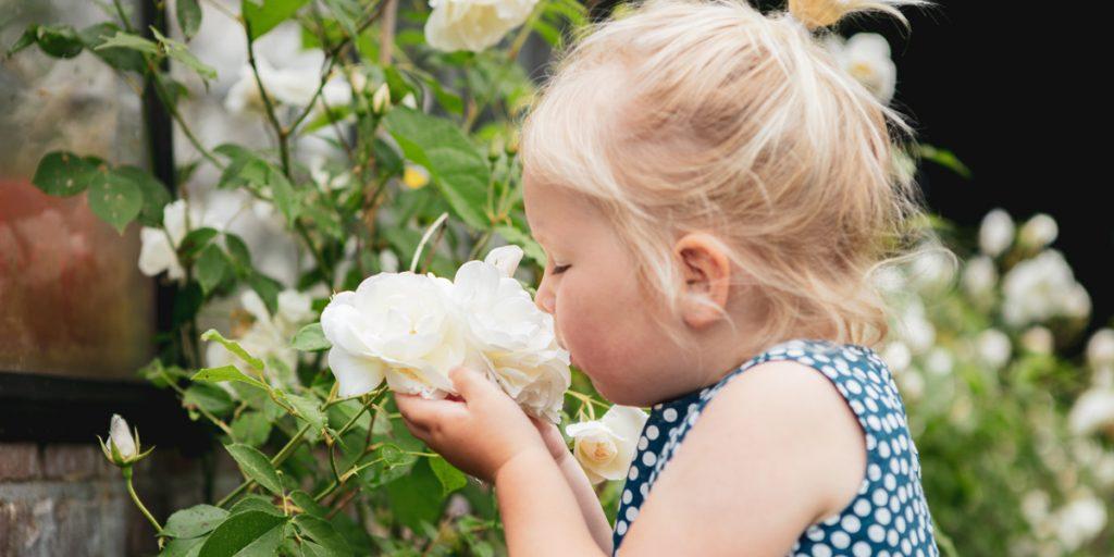 Meisje ruikt aan roos