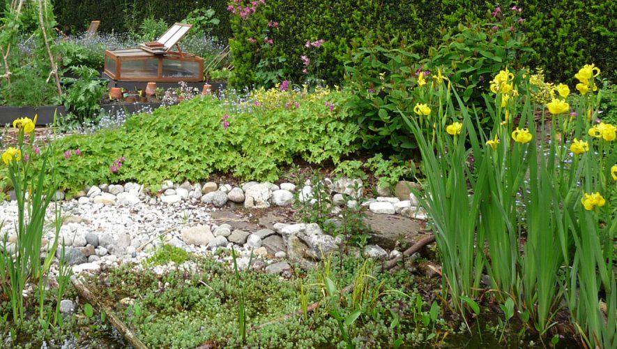 Gele lis of iris pseudacorus als blikvanger in de tuin