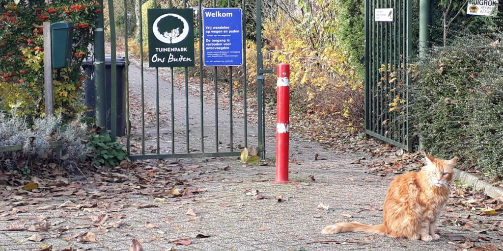 Huge-cat-on-guard-at-Tuinenpark-Ons-Buiten-gate