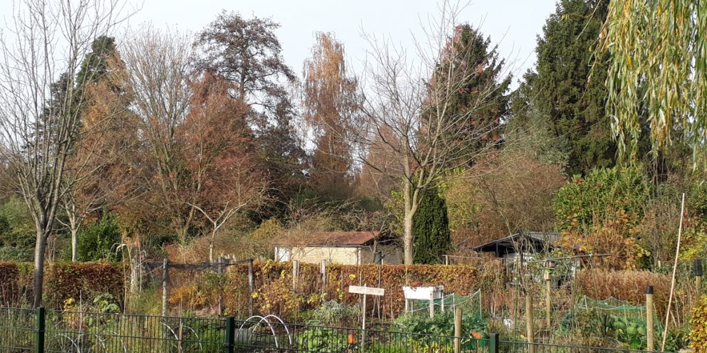Vegetable-plots-and-big-trees-at-garden-park-Ons-Buiten