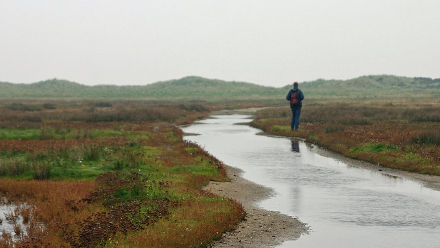 Wetland walker on Wadden island Terschelling