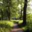 Pad tussen bos en akker